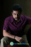 Singam 2 New Gallery (61)