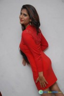 Neha Saxena Photos at Dandu Pressmeet (10)