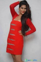 Neha Saxena Photos at Dandu Pressmeet (2)
