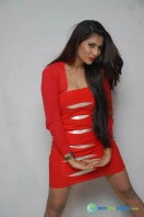 Neha Saxena Photos at Dandu Pressmeet (4)