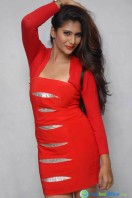 Neha Saxena Photos at Dandu Pressmeet (7)