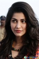 Si3 Actress Shruti Haasan (5)